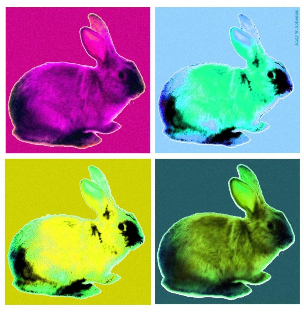Colourful Bunnies